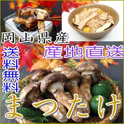 国産松茸通販ランキング400-3