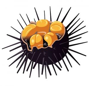 うに通販ランキング、比較!うに通販ランキング-400。ふぐ通販,うに通販,牡蠣通販,生牡蠣,生うに,ホタテ通販,いくら通販,鮭通販,クエ鍋,高級,おすすめ,人気,ランキング,マグロ通販,海鮮丼通販