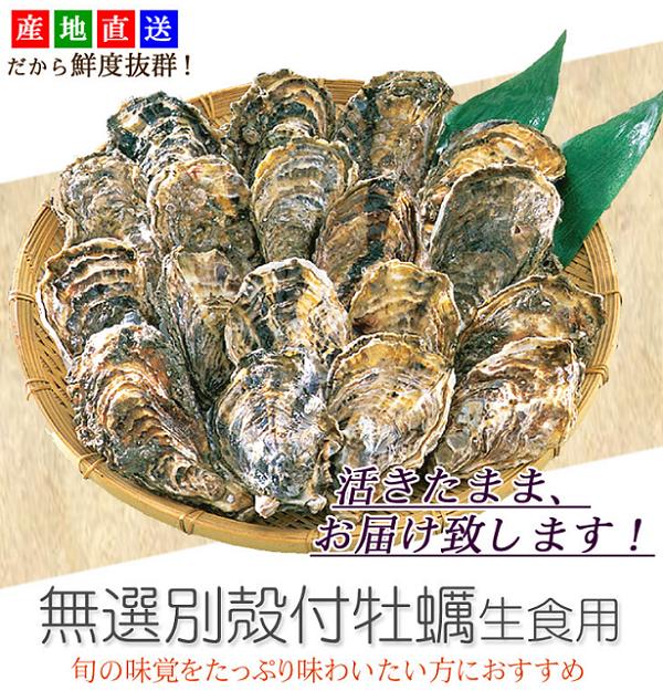 牡蠣一斗缶通販広島600