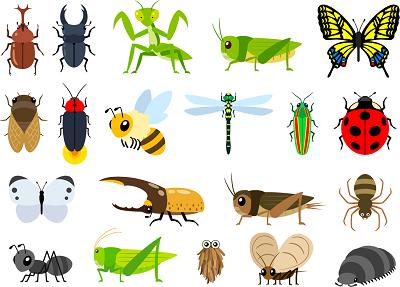 昆虫食通販ランキングイラスト1-400。昆虫食通販,昆虫食,通販,食用昆虫,食用昆虫通販,食べられる虫,昆虫料理,未来食,カブトムシ,シロアリ,昆虫スナック,ドライ,粉末,パウダー,コオロギ,サソリ,タランチュラ,イナゴ,蜂の子