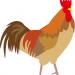おすすめの宮崎地鶏、妻地鶏など大手通販、口コミランキング上位常連の人気の宮崎地鶏お取り寄せを比較してまとめています。宮崎地鶏妻地鶏通販おすすめランキングイラスト400